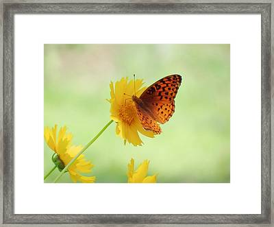 Fritillary Fun Framed Print
