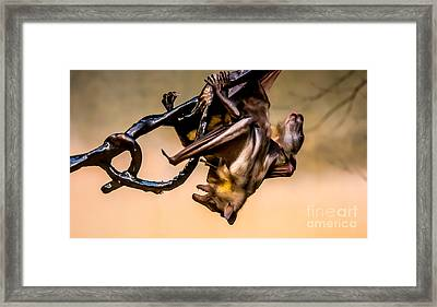 Friut Bats Mingle Framed Print