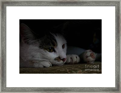 Frodo Framed Print by Marta Grabska-Press