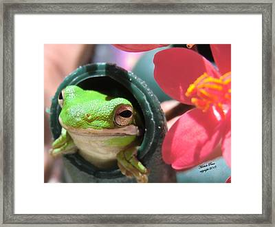 Frog At Selby Framed Print by Michele Penn