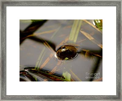Frog At The Surface Framed Print