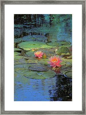 Frog Creek Framed Print by Kat Besthorn