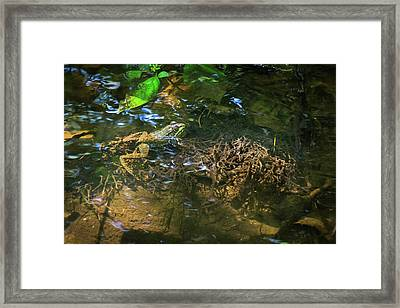 Framed Print featuring the photograph Frog Days Of Summer by Bill Pevlor