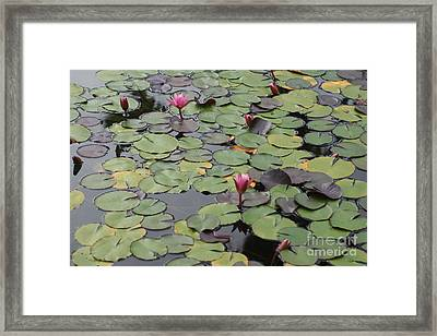 Frog Gardens Framed Print by Amy Holmes