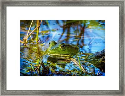 Frog In My Pond Framed Print