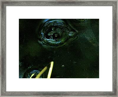 Frog In Pond 2 Framed Print by Jennifer Pevos