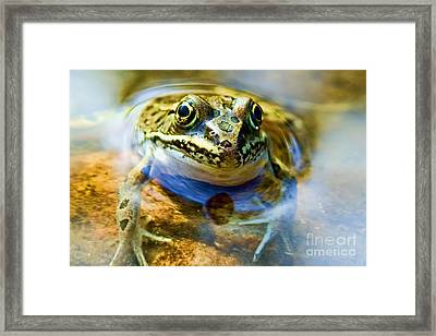 Frog In Pond Framed Print