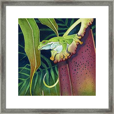 Frog In Tropical Pitcher Framed Print