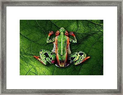 Frog Bodypainting Illusion Framed Print