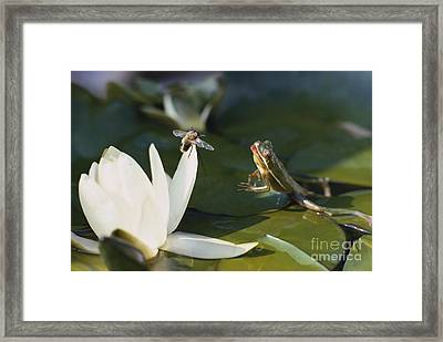 Frog Jumping At Prey Framed Print by A. Cosmos Blank