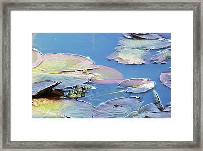 Frog Love Framed Print by Brent Dolliver