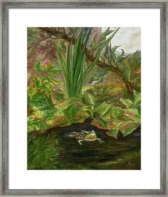 Frog Medicine Framed Print