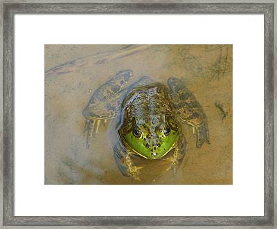 Frog Of Lake Redman Framed Print by Donald C Morgan
