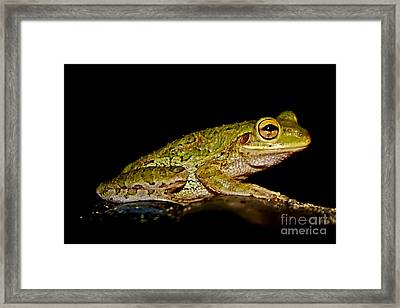 Framed Print featuring the photograph Cuban Tree Frog by Olga Hamilton