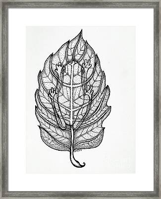 Frog On A Leaf Framed Print by Nick Gustafson
