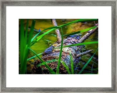 Frog On A Log 1 Framed Print