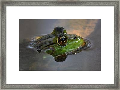 Frog On A Mission Framed Print by Monteen  McCord