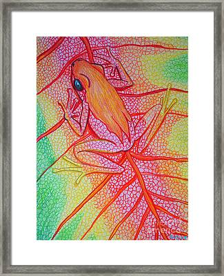 Frog On Leaf Framed Print by Nick Gustafson