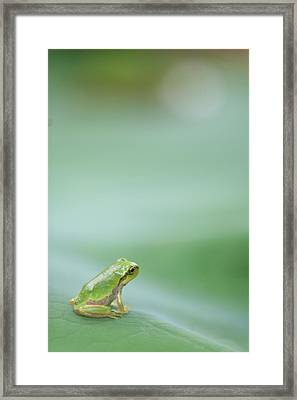 Frog On Leaf Of Lotus Framed Print