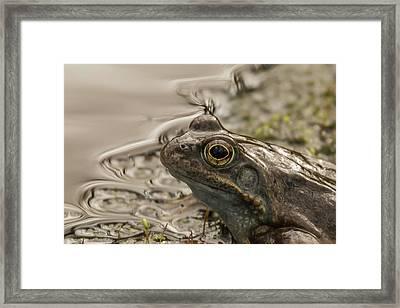Frog Portrait Framed Print