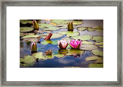 Frog Prince Of The Lily Pads Framed Print by John Bartelt
