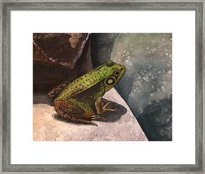 Frog Framed Print by Sharon Farber