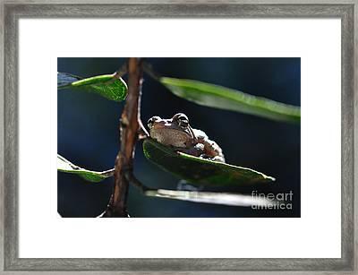 Frog With Twinkle In Eye Framed Print by Wayne Nielsen
