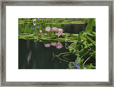 Water Lily Reflections Framed Print by Linda Geiger