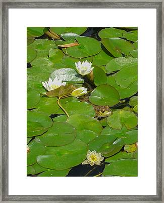 Frog With Water Lilies Framed Print