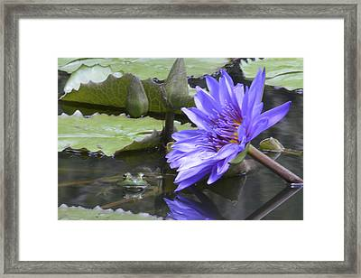 Frog With Water Lily Framed Print by Linda Geiger
