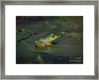 Froggy 2 Framed Print by Douglas Stucky