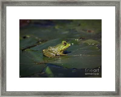 Froggy 2 Framed Print by Douglas Stucky