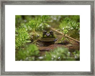 Froggy Framed Print by Douglas Stucky