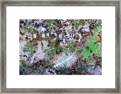 Frogs And Scissors Framed Print by Biagio Civale