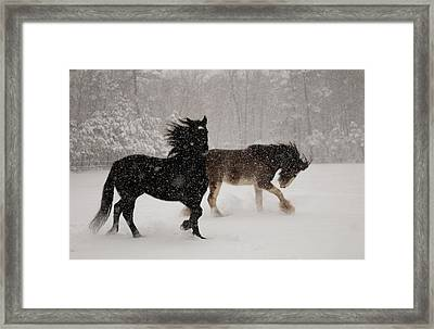 Frolic In The Snow Framed Print