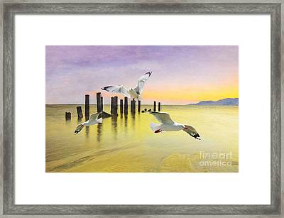 Frolicking Gulls Framed Print