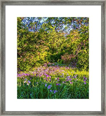 Frolicking Phlox 2 Framed Print