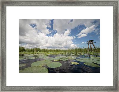 From A Frog's Point Of View - Lake Okeechobee Framed Print