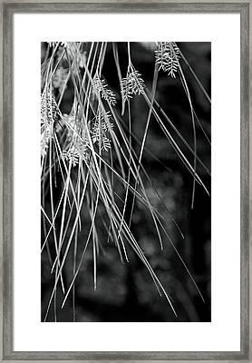 From Above Framed Print by Fraser Davidson