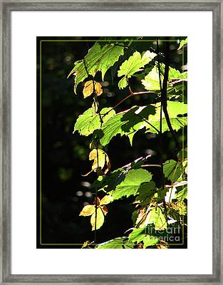 From Behind The Grapevine Framed Print by Deborah Johnson