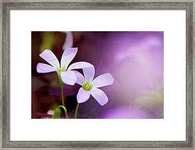 From Garden Of Dream Framed Print