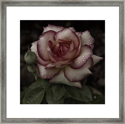 From Me To You Winter Rose Framed Print by Barbara Middleton