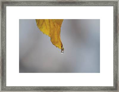 From My Veins Framed Print