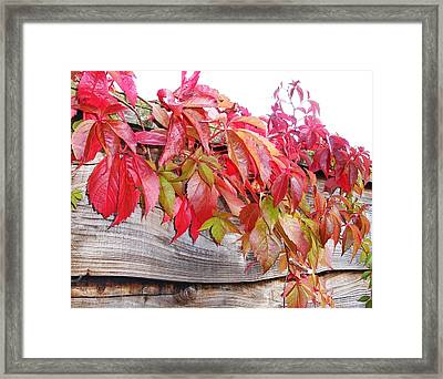 From Over The Fence Framed Print by Lucia Del