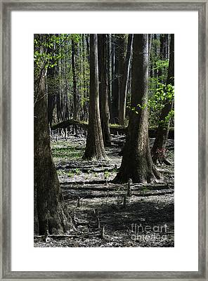 From Small Seeds Framed Print by Skip Willits
