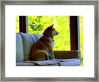 From The Dog Side Of View Framed Print by Aron Chervin