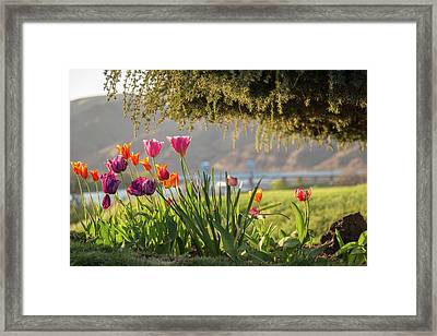 From The Driveway Framed Print