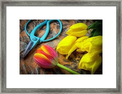 From The Flower Garden Framed Print by Garry Gay