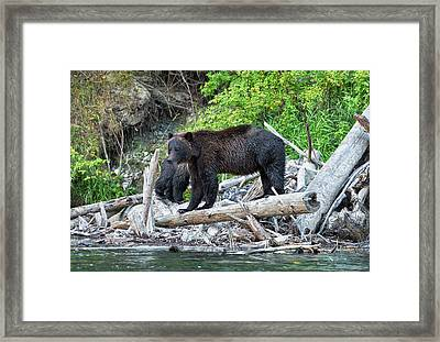 From The Great Bear Rainforest Framed Print