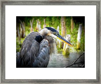 From The Series Great Blue Number 2 Framed Print